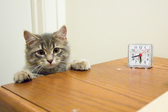 Логотип «кот на час»